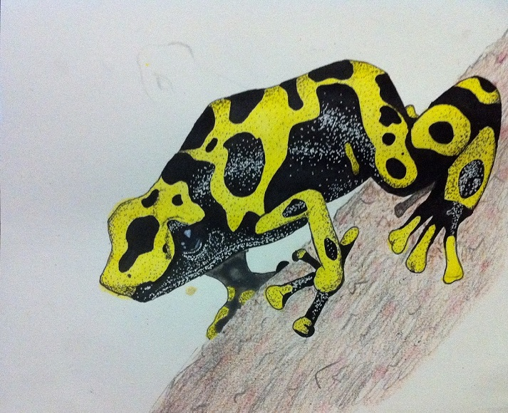 Yellow Poison-Dart Frog