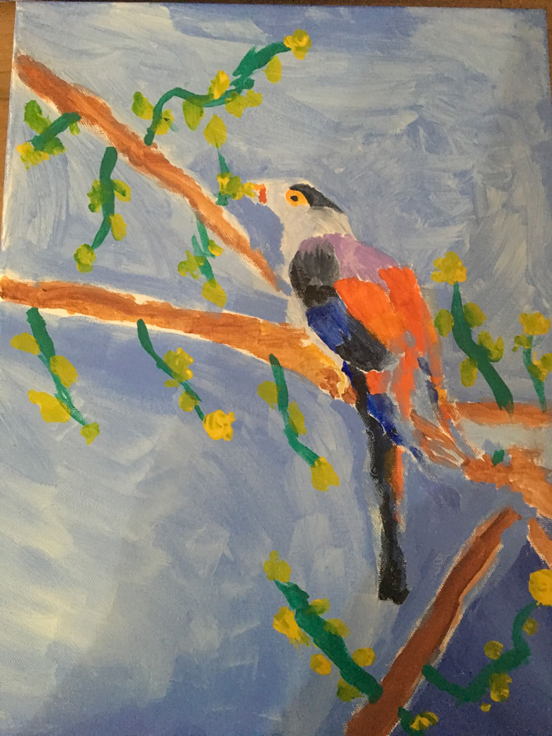 Bush Bird
